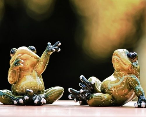 frogs-5079716_640